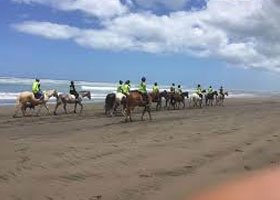 Hen Party Auckland Prices - Auckland Horse Trekking Hens Do