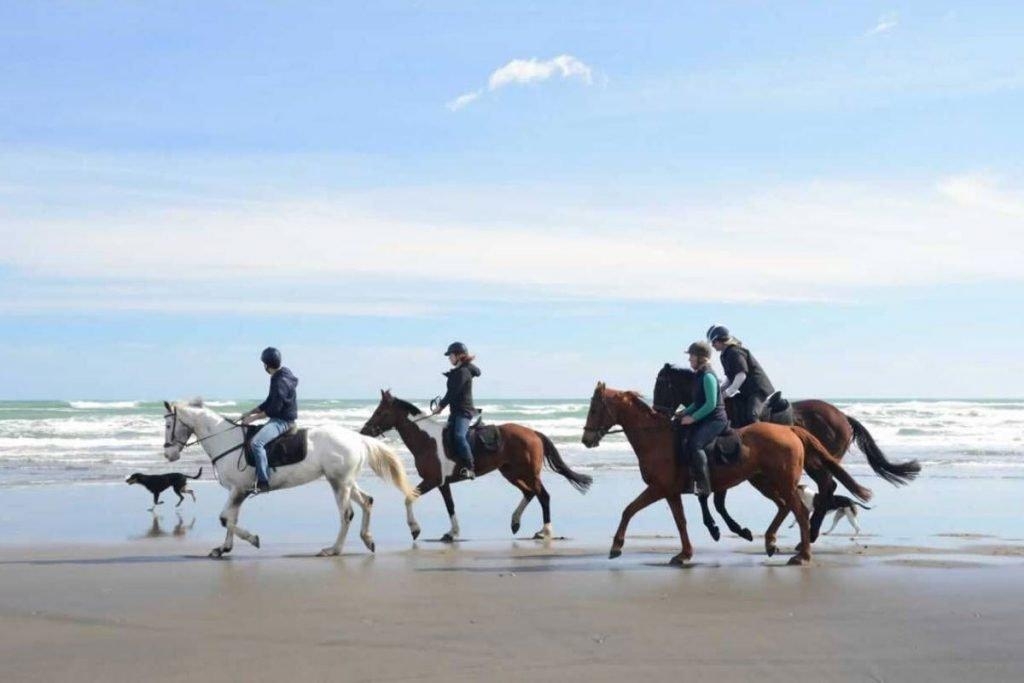 Auckland Horse Trekking Hens Do