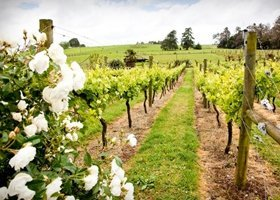 Hen Party Hamilton Prices - Hamilton Winery Tour