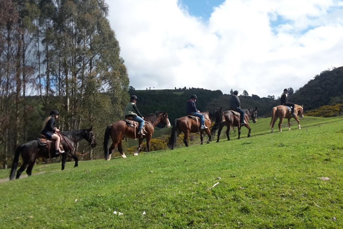 Rotorua Horse Trek Combo